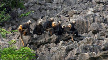Cat Ba Monkey Island